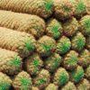 Coir Logs